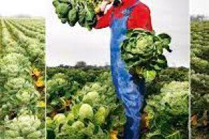Groentesnijderij als dagbesteding voor clienten
